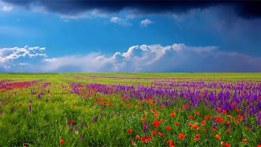 Cover Image for Summer Landscape