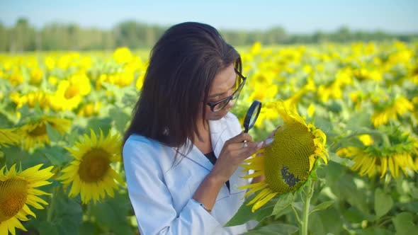 Thumbnail for Scientist Examining Seeds Under Magnifier in Field