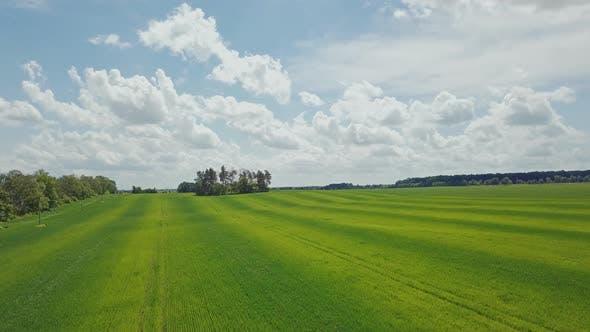 Thumbnail for Green Wheat Field Landscape