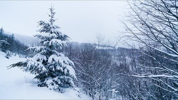 Falling Snowflakes in Frozen Mountains Landscape with Fir Trees