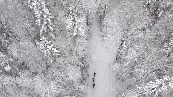 Drone Video of People Walking Through a Snowy Forest