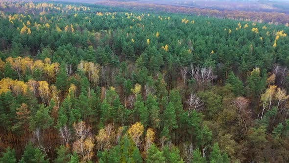 Aerial view of autumn forest. Autumn forest aerial drone view from above