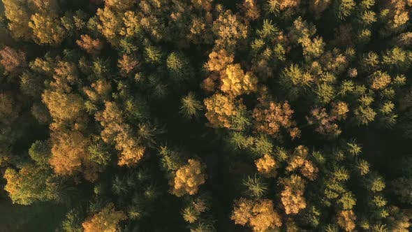 Thumbnail for Autumn Forest View From Drone