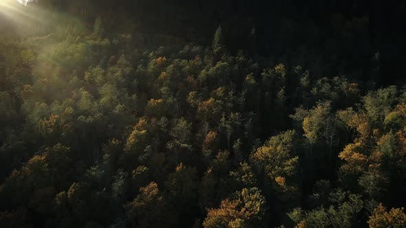 Cover Image for Amazing Lighting On Colorful Forest Canopy Of Fall Trees In Sunset Aerial