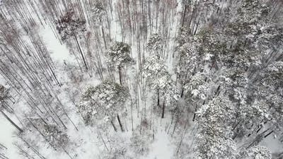 Fly Over the Winter Forest