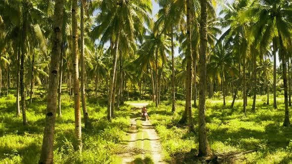 Thumbnail for Aerial View of Young Couple of Tourists Riding a Motorbike on Among Coconut Palms in Siargao