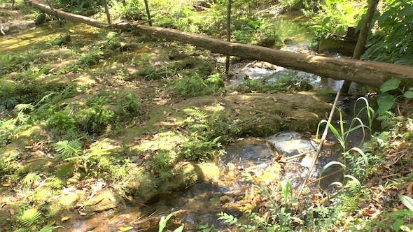 Thumbnail for Small Creek In Topes de Collantes, Cuba
