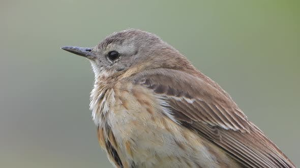 Little Bird With Light Brown And Grey Stripes Pattern