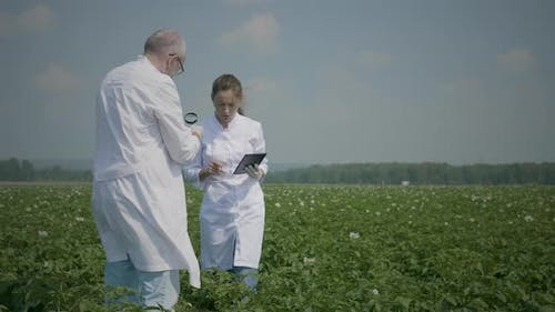Scientists work in agricultural field