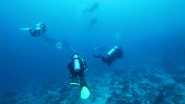 Cover Image for Divers Meet Mantas On Ari-Atoll Manta Point