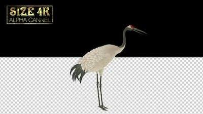 Chinese Crane Alpha 01