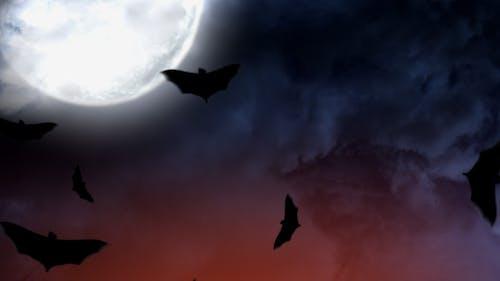 Halloween Mond Fledermäuse 1