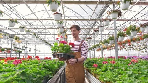 Smiling Florist Carries Flowers on a Tray in a Greenhouse
