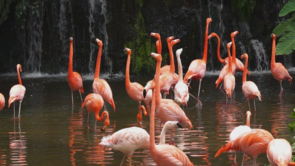 Cover Image for Pink Flamingos