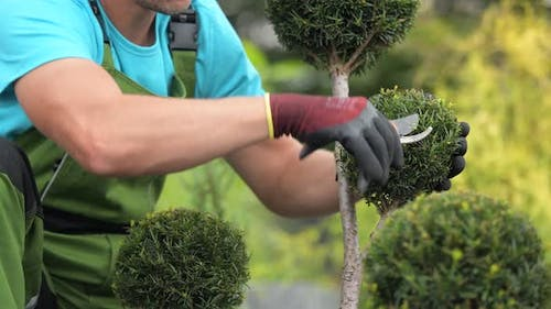 Worker in His 30s Trimming Plants Using Small Garden Scissors