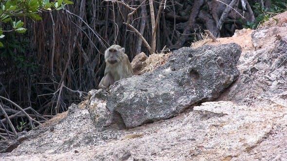Thumbnail for Small Monkey Sitting On Island Shore, Komodo
