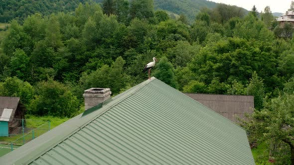 Thumbnail for Aerial Drone View Stork in the Roof