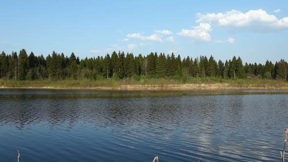 Thumbnail for Coniferous Forest And River At Spring, Russia