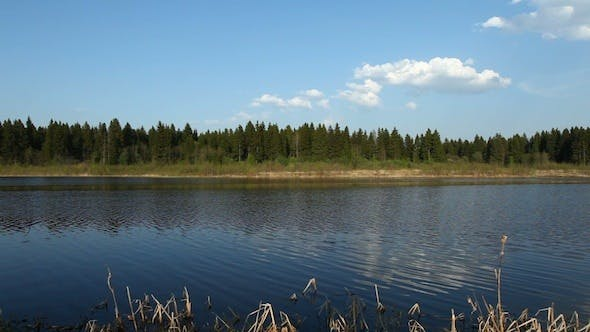 Cover Image for Coniferous Forest And River At Spring, Russia 2
