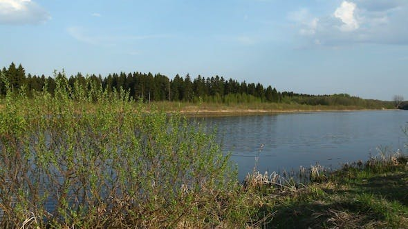 Thumbnail for Coniferous Forest And River At Spring, Russia 3