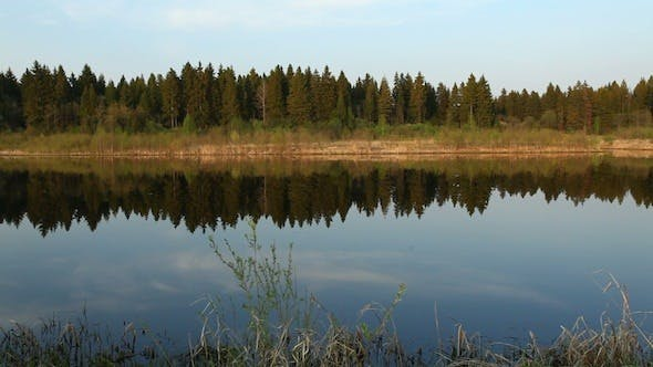 Cover Image for Reflections Of Pine Trees In Mirror Of Calm Water