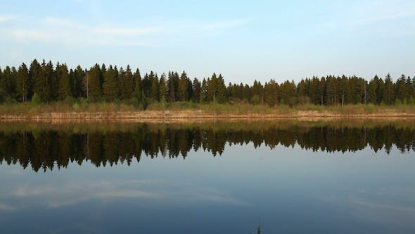 Cover Image for Reflections Of Pine Trees In Mirror Of Calm Water 2