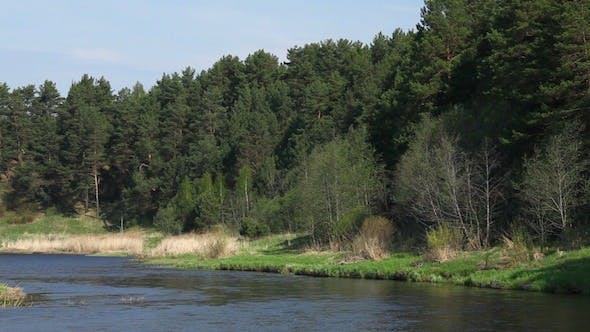 Thumbnail for River And Pine Trees Forest At Spring 2