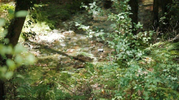 Thumbnail for Forest River In Troodos Mountains, Cyprus 2