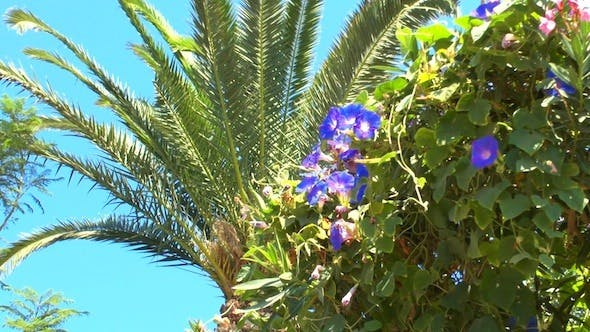 Cover Image for Palm Tree Leaf and Blue Flowers