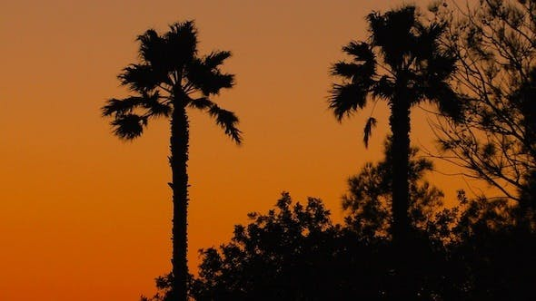 Thumbnail for Tropical Sunset Background with Palm Trees