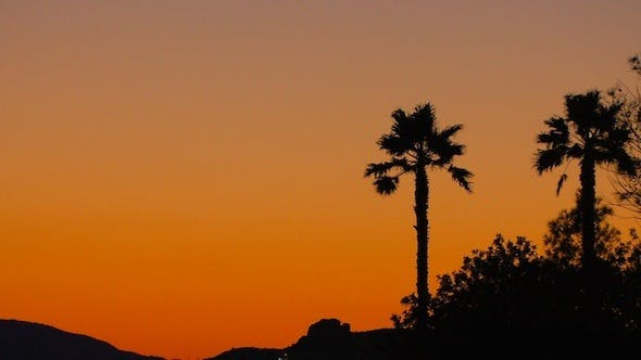 Cover Image for Tropical Sunset Background with Palm Trees 2