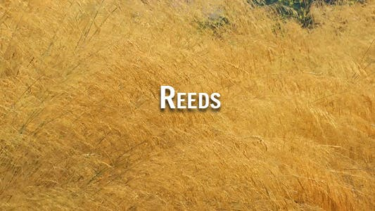 Cover Image for Reeds 2