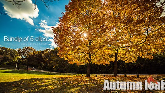 Cover Image for Autumn Leafs Bundle