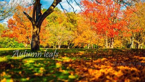 Herbstsaison Bundle
