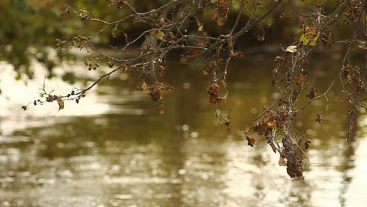Thumbnail for Autumn Faded Leaves And River