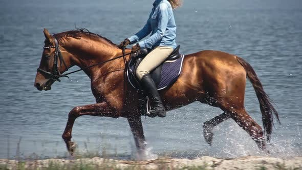 Thumbnail for Bloodstock Russian Don Horse Trotting on Water