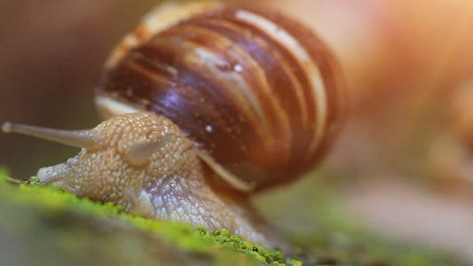Thumbnail for Snail Closeup In The Rays Of Sun, Transfer Of Focus