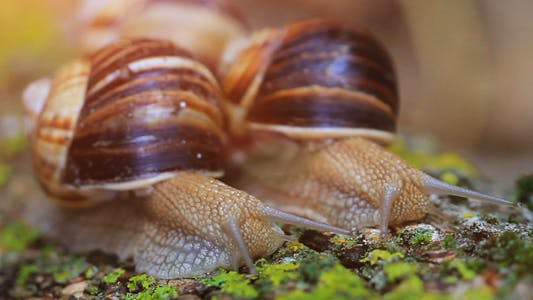 Cover Image for Snail Closeup In The Rays Of Sun
