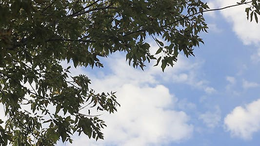 Cover Image for Green Leaves And Blue Sky With Clouds
