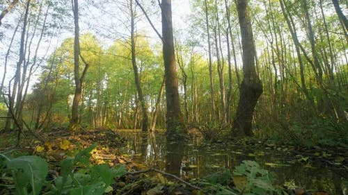 Trees Among the Water in Mysterious Mirror Pond, Beaver Backwater