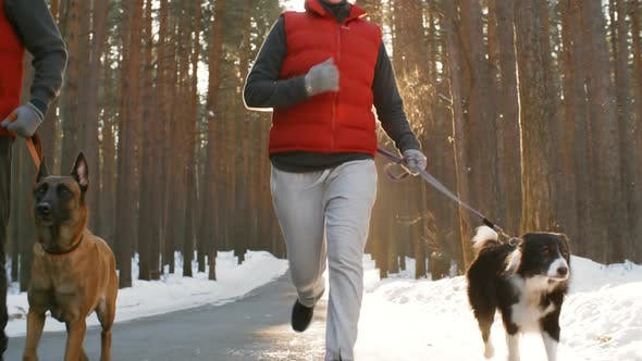 Thumbnail for Couple Running in Woods during Walk with Dogs