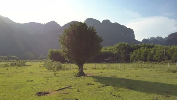 Tree with Foliage Near Farm Against Mountains Upper View