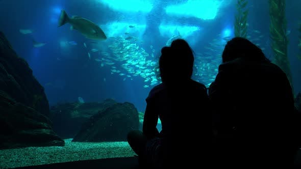 Thumbnail for Family Looking At Oceanarium Pool