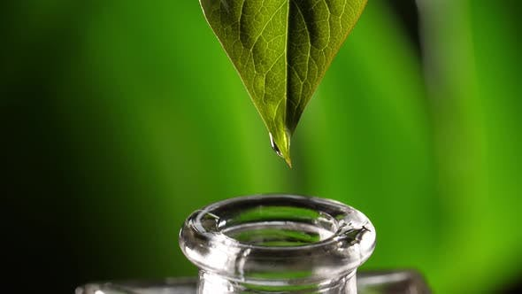 Kräuteressenz. Alternative Healthy Medicine