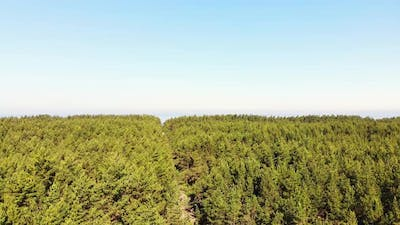 Pine Forest With Calm Sea Horizon Panorama In Lithuania