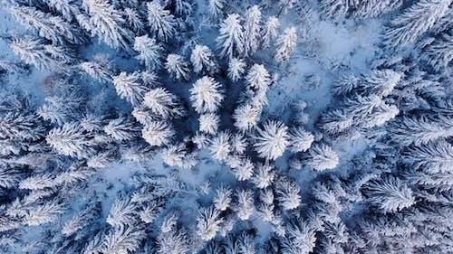 Mountain Trees Snow Aerial Drone Top Down Screwdriver Shot in Fundata, Romania
