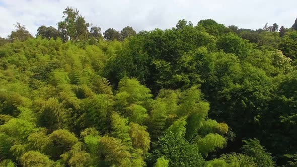 Thumbnail for Lush Greenery Covering Hillsides of Park, National Sanctuary, Preserving Nature