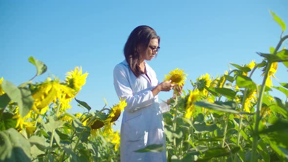Thumbnail for Woman Agronomist Examining Plant in Sunflower Field