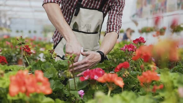 Thumbnail for Man with a Beard in a Garden Apron Pours Ornamental Plants