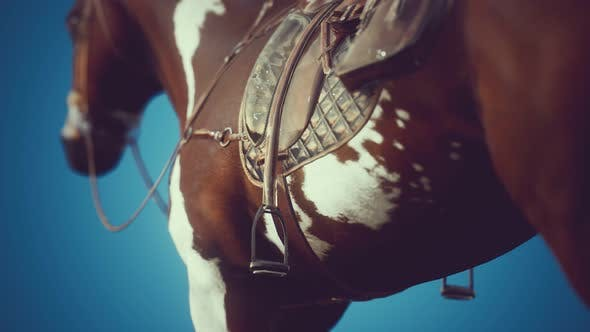 Thumbnail for Saddle with Stirrups on a Back of a Horse